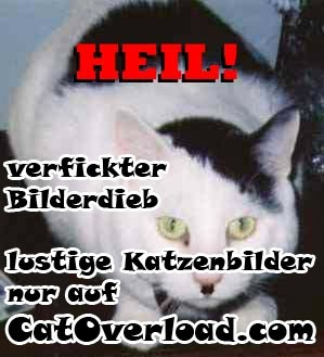 catoverload_catdump04_27