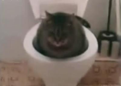 cat_toilette.jpg