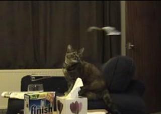 cat_vs_heli.jpg