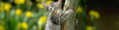 catdump02.jpg