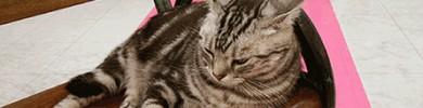 stereo_catdump.jpg